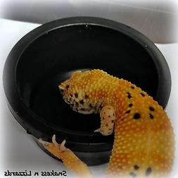 Water/Food Dish for Small Reptiles Geckos Black Stackable Pe
